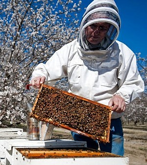 apicoltore_mandorli